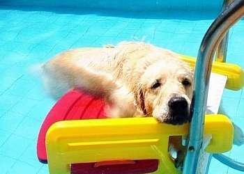 Escada para cachorro sair da piscina